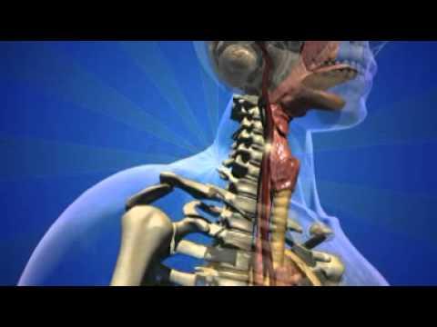 L 39 odyss e du sucre 1 le voyage du sucre dans le corps for Interieur du corps humain photo