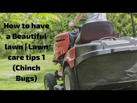 How to have a Beautiful lawn | Lawn care tips 1 (Chinch Bugs)
