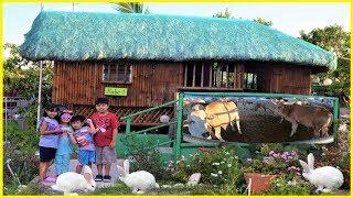 Farm Animals -  Sky's Philippine Adventure