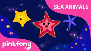Shooby dooby doo Starfish | Sea Animals Song | Animal Song | Pinkfong Songs for Children