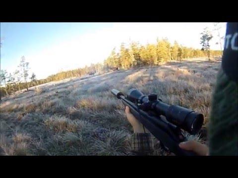 Älgjakt 2015 ! Skjuter 17 Taggare Och Kalv För östlaikan Lina