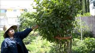 Moms Cambodian Garden