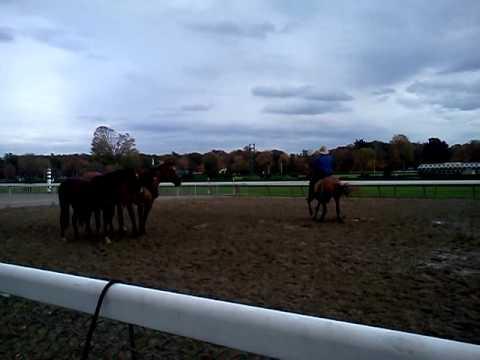 Guy McLean Saratoga Equine Exhibit and Expo 2011 (6)