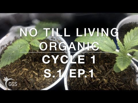 Keeping Hungry Nasty Insect Mouths away with Covers: Living Organic NoTill Cannabis. Cycle 1, Ep. 1