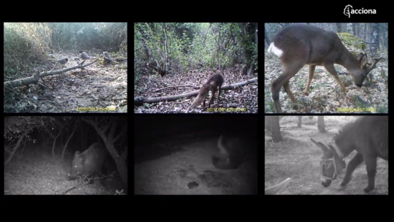 Fauna salvaje que habita en el entorno de las instalaciones de ACCIONA