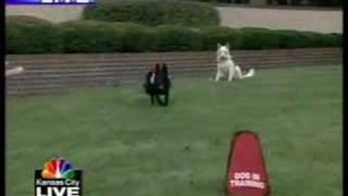 Sit Means Sit Dog Training Of Kansas City On Tv