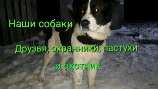 Обзор хозяйства/ Собаки  Review of the economy/ Dogs