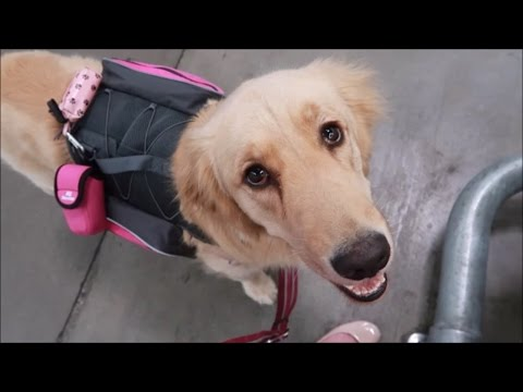Thumbnail: Uncomfortable Encounter with my Service Dog 🐕 (4/13/17)