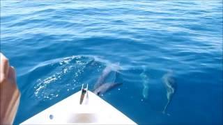 Dauphins jouent avec le bateau, Les Baleines Rand'eau, Nosy Be, Madagascar