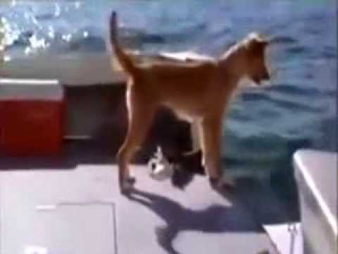Dog rescued by dolphin...just amazing...un Chien sauvé par un dauphin, extraordinaire....