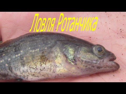 знакомства коломна рыба