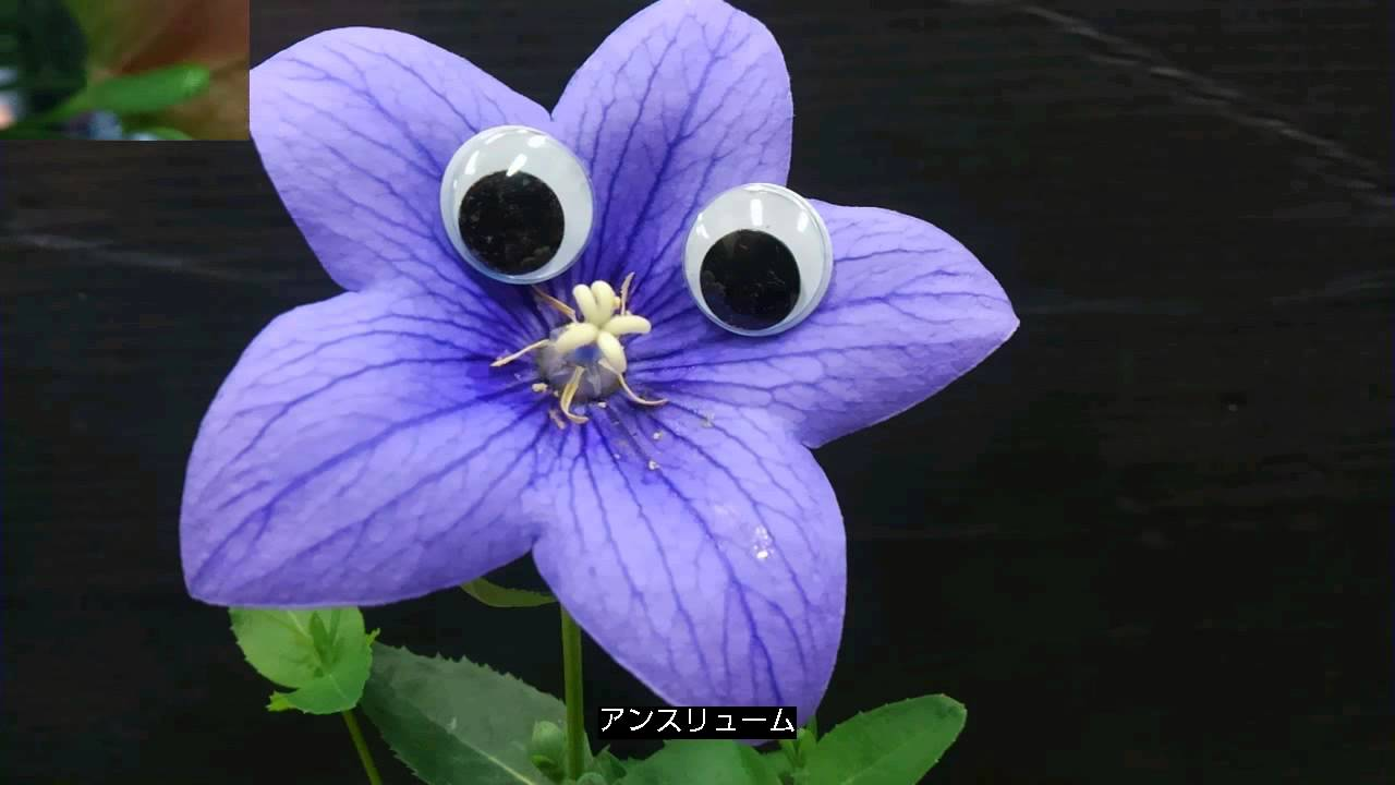 Flowers with eyes.