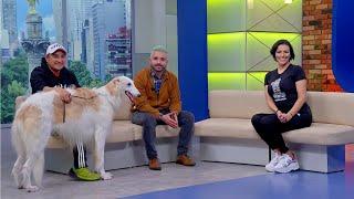 HeralDog | Borzoi | Miguel Ángel, criador de borzoi | Algunos ejercicios con nuestros perros.