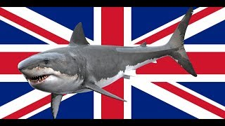 Great White Sharks Be Found In The UK?