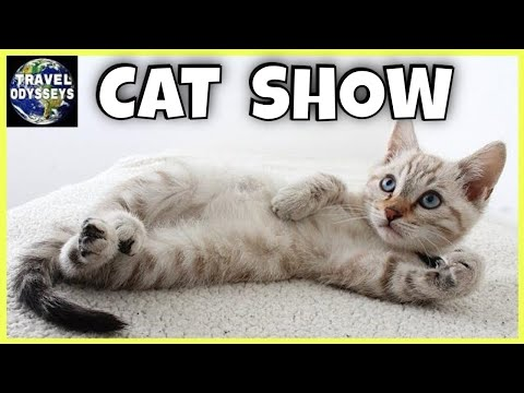 TICA Cat Show 2019 | Pet Greatness with Cute Cats!