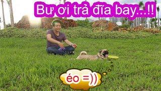 Dạy Chó Pug Bắt Đĩa Bay - Ai Nói Chó Pug Là Chó Mặt Ngu? ⏩ Pugk vlog