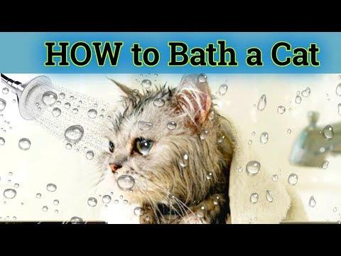 How to bath a cat in hindi/Urdu | Cat shampoo