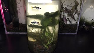 Growing Pothos Underwater