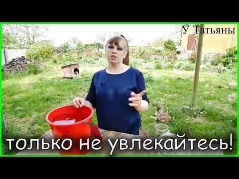 ЯНТАРНАЯ КИСЛОТА - секрет ОГРОМНОГО урожая! Янтарная кислота как подкормка /удобрение/ для растений!