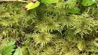 Typy siedliskowe lasów - Bory