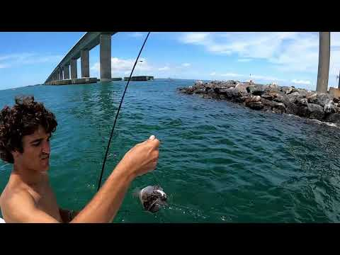 Fishing Inside Tampa Bay For Snapper, Grouper And Inshore Species.