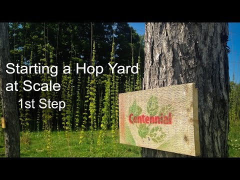 Best Advice for Starting a Hop Yard