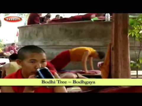 Bodhi Tree-Bodhgaya  | East India Tourism in Hindi | Tourism Places To Visit