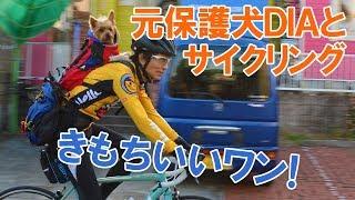 Diaくん、Daddyと二人で自転車でお散歩 Daddyの背中に乗って風を切って...