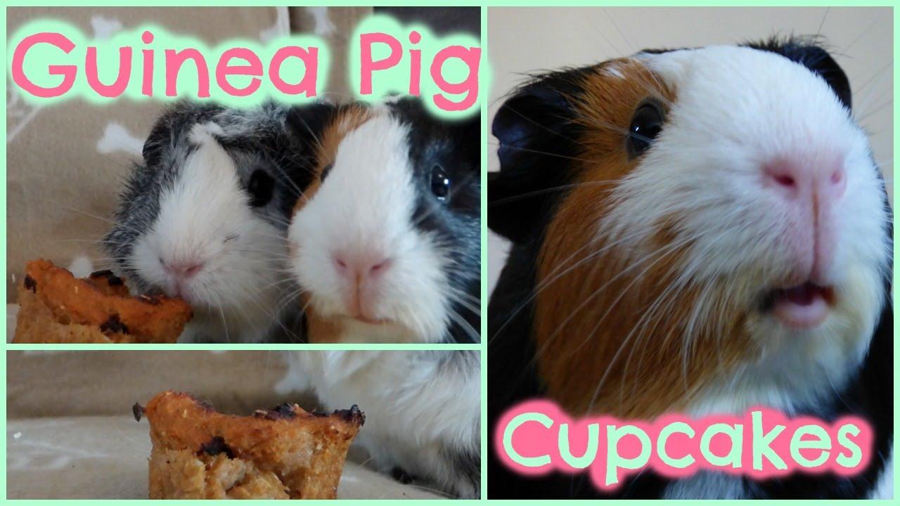 Diy guinea pig treats cupcakes youtube for Diy guinea pig things