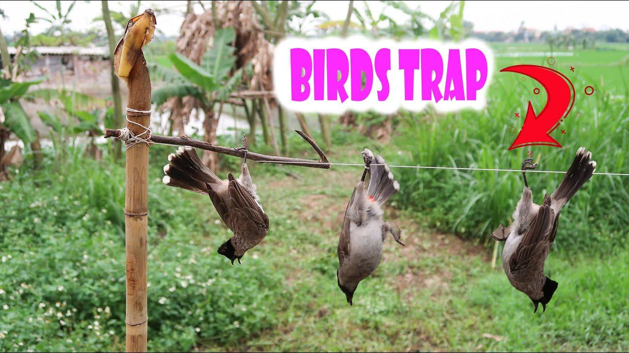 HƯỚNG DẪN CHI TIẾT CÁCH LÀM BẪY CHIM ĐƠN GIẢN HIỆU QUẢ ( BIRD TRAP) LẠ TV