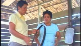 An introduction to cassava (Guyana)