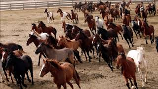 Lil Nas X - Old Town Road (feat. KIDZ BOP Kids, Billy Ray Cyrus, Young Thug, Mason Ramsey,  Thor...)