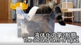 液体化するねこ2-maru-becomes-liquid-2