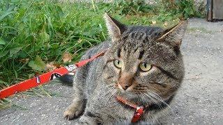 Кот Первый Раз Гуляет На Улице/ Cat Walks for the First Time