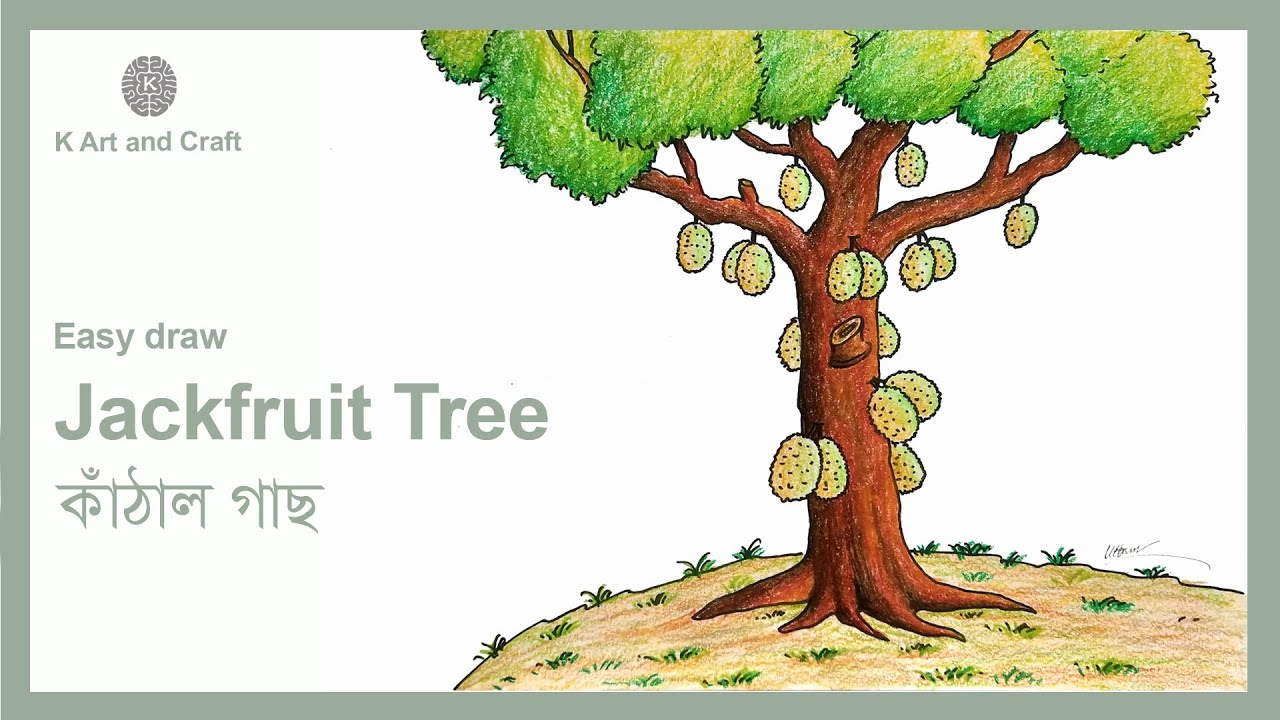 How To Draw Easy Jackfruit Tree Step By Step Tree Drawing Youtube Download 7 cartoon jackfruit stock photos for free or amazingly low rates! how to draw easy jackfruit tree step by step tree drawing