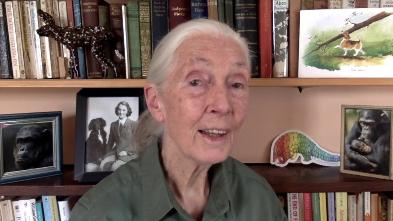 Dr. Jane Goodall's Message for World Rangers Day