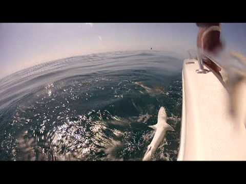 Florida Keys Reef and Wreck  Fishing and Spearfishing with Florida Keys Reel Adventures