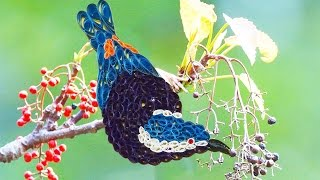 quilling artwork | How to make Beautiful blue Bird Making video