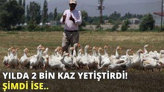 Yılda 2 bin kaz yetiştirdi... Şimdi Türkiye'nin birçok iline o hayvanları satıyor