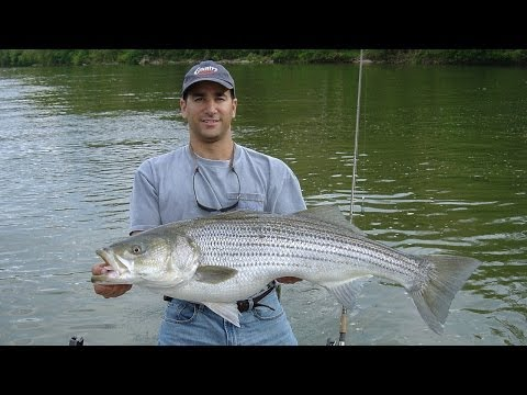 FISHING For STRIPERS/ROCKFISH(Tidal Potomac River Fishing)