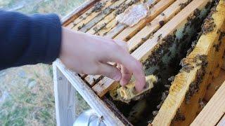 Bee Update October/November 2016: Winter is Coming