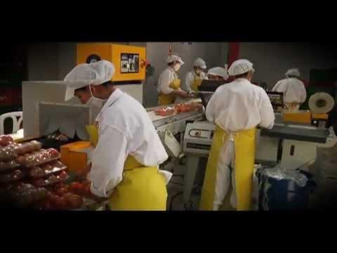 Higiene y manipulaci n de alimentos cap youtube for Higiene y manipulacion de alimentos pdf