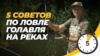 Ловля голавля спиннингом на реках Пять советов за пять минут
