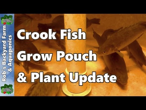 Aquaponic System – Sick Fish, Grow Pouch, & Plant Update #aquaponics