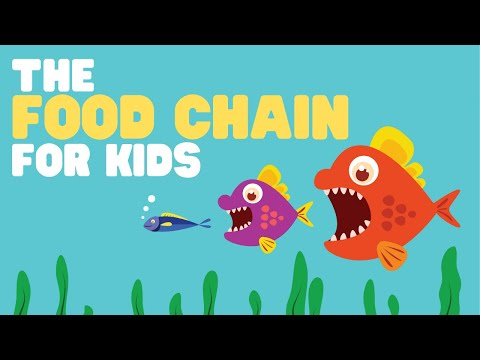 Food Chain for Kids | What is a food chain? |  Come learn ab
