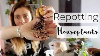 Collective Houseplant Haul & Repotting   Repot Houseplants & Stress About Pots w/ Me!