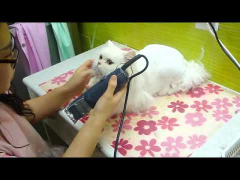 Cats Haircut How To Cut Your Cats Fur Youtube