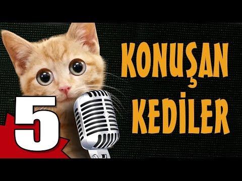 Konuşan Kediler 5 - En Komik Kedi Videoları