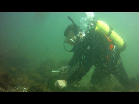 Buceo en Punta del Este y remoción de líneas de pesca