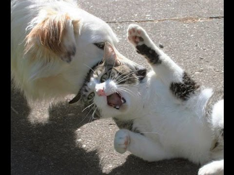 Funny Cats Compilation [Most See] Funny Cat Videos very popular